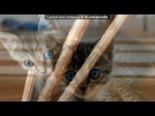 «Моё полосатое счастье!!!!(Варя)» под музыку Песня - Про кошек. Picrolla